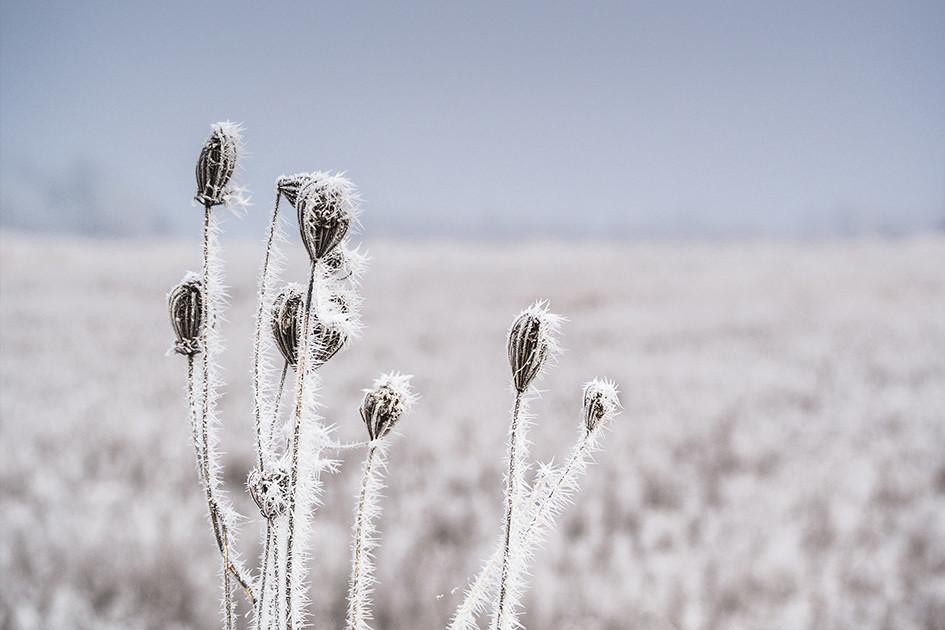 zima_leden2015